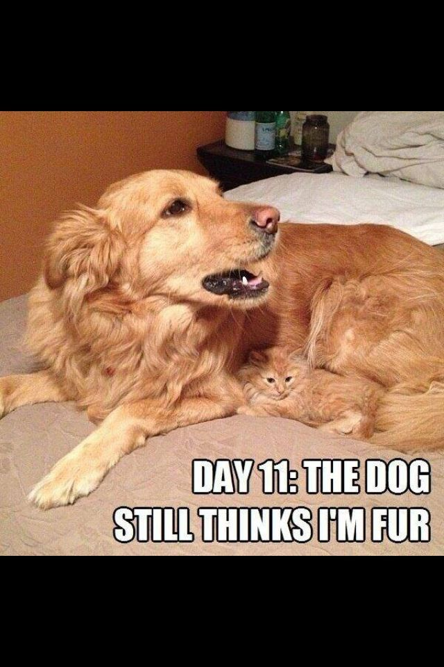 Beautiful Cute Animals With Funny Captions Funny Animal Sayings Funny Cats And Dogs