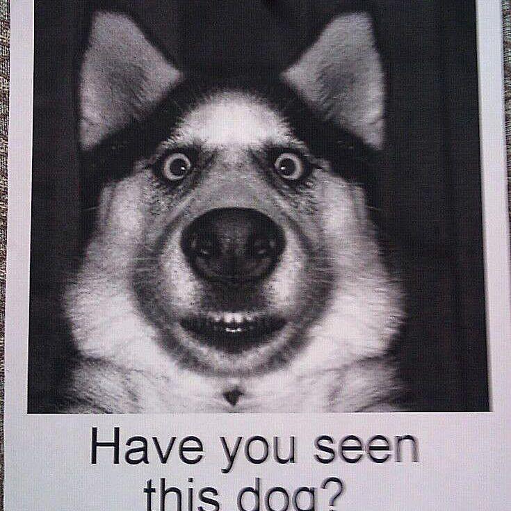 lost dog 58b8c9475f9b58af5c8c7aec
