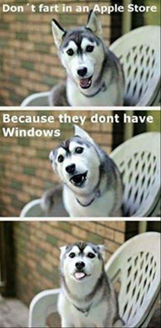 funny dog memes apple store no windows