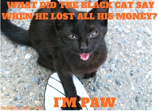Halloween Joke Black cat Meme 2 – What did the black cat say when he lost all his money