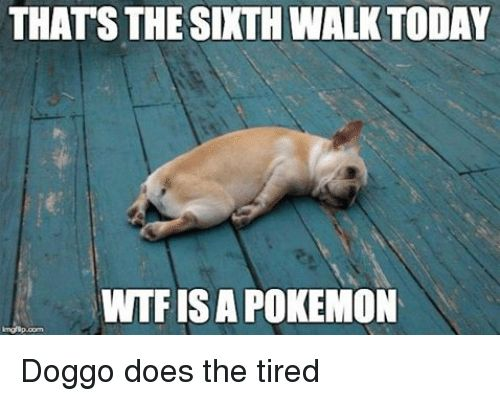 Doe Funny and Pokemon THATS THE SIXTH WALK TODAY WTFISA POKEMON Doggo does