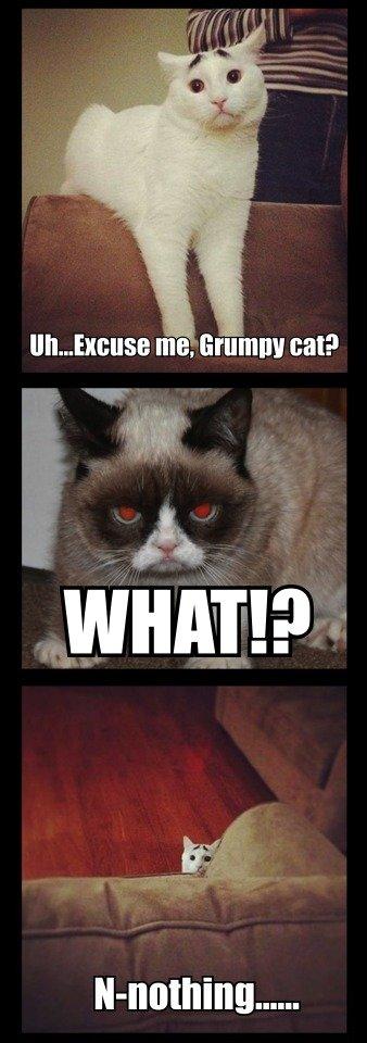 grumpy cat meets scaredy cat Funny Animal Memes Funny Cat Quotes Grumpy Cat Quotes