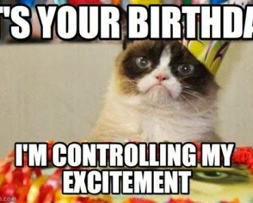 Find the Stunning Funny Birthday Memes with Angry Cat