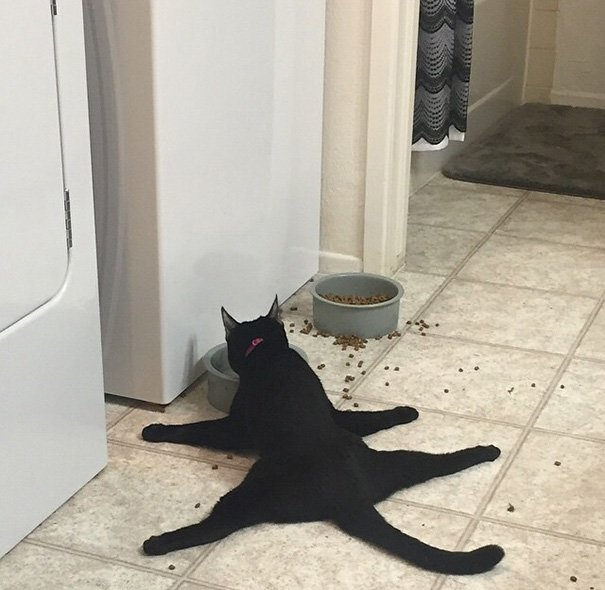 1 This Is My Friends Cat Eating Dinner