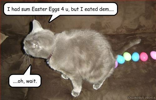 Find the Stunning Funny Cat Memes Go Away Bunny Easter is Over Images