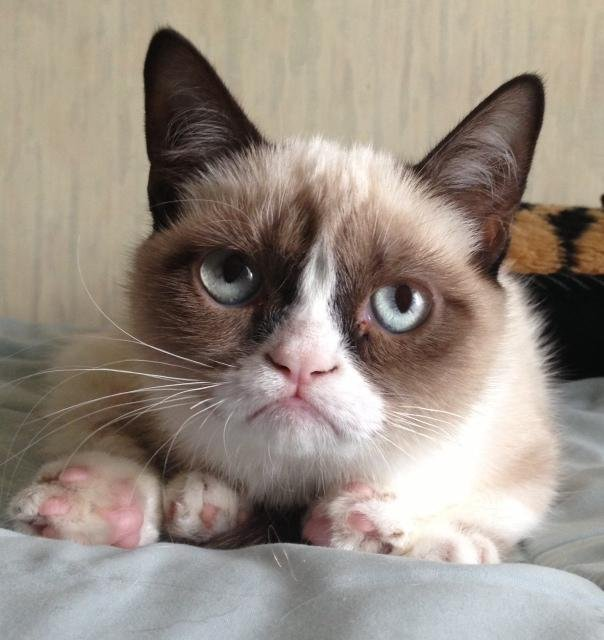 meme the lesser used original Grumpy cat photo