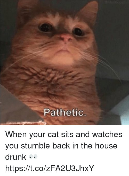 Drunk Memes and House Pathetic When your cat sits and watches you stumble