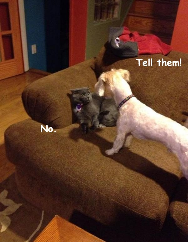 Domestic Fight over the Shredded Toilet Paper [funny cat and dog picture]