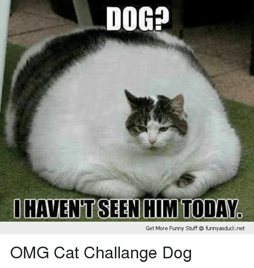 Cats Dogs and Funny OOGp Get More Funny Stuff funnyasduck OMG