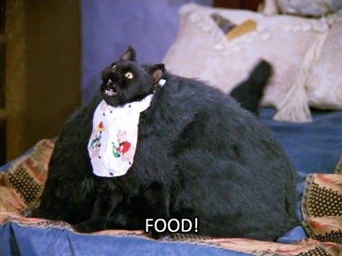 cat LOL funny food kawaii hipster cats Grunge fat food emo Sabrina the teenage witch i