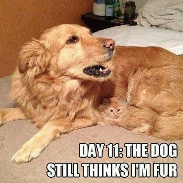 funny cat pic 5