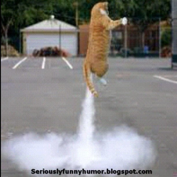 Cat Farts and Flies up in the air funny photo