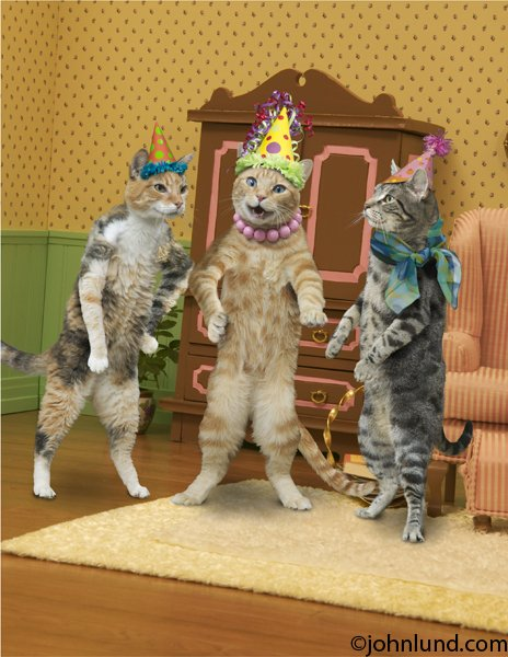 Image result for birthday cat