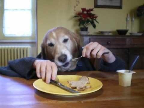 funny human dog