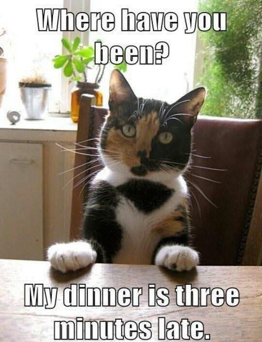 Funny Cat Memes 138
