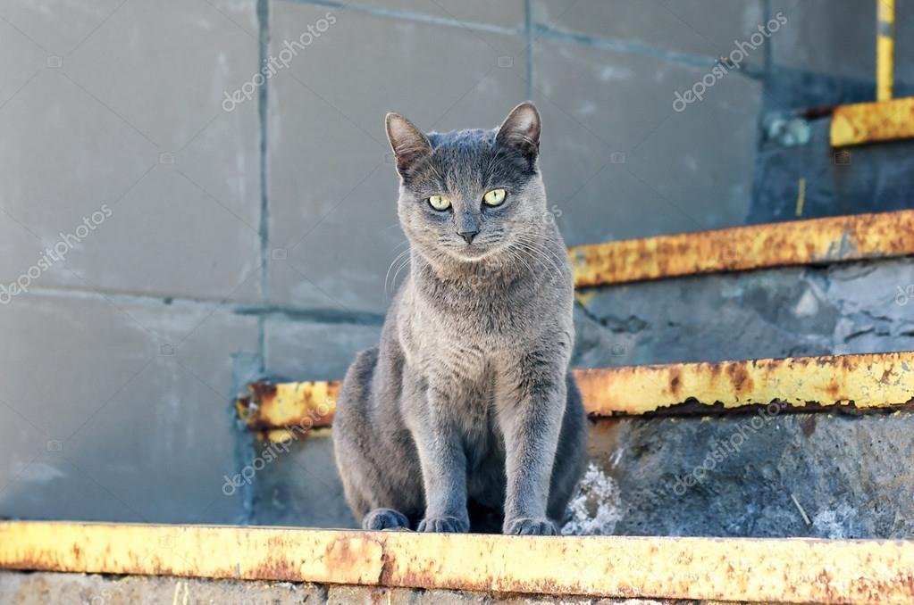 Curious blue funny cat sitting on the stairs in relaxing pose — Foto de bozhenalnyk