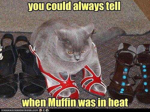 shoes Heat heels romance captions attractive Cats