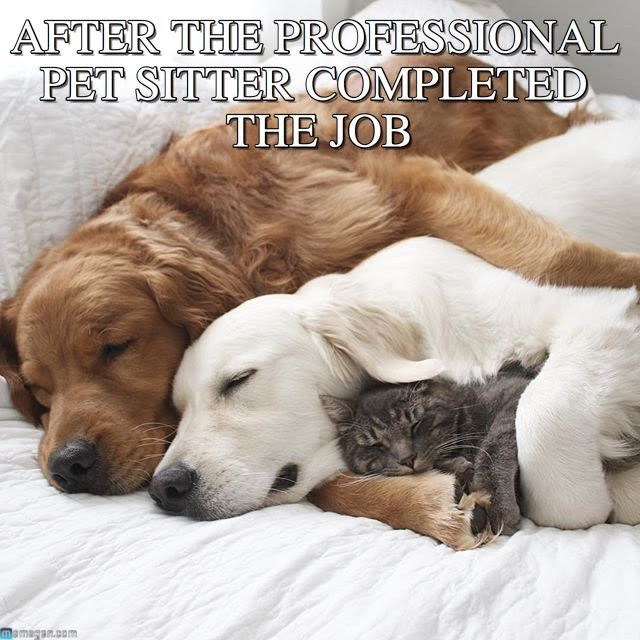 A dog ting hugged by his therapy dog hugging a kitten Funny pics Fun Pics