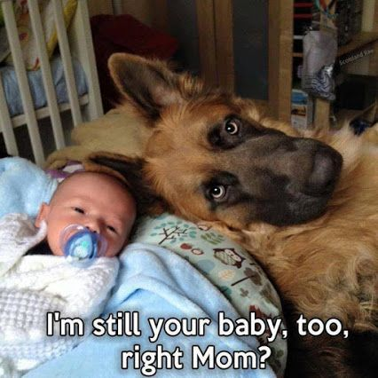 Funny dog meme from Pets on Mom