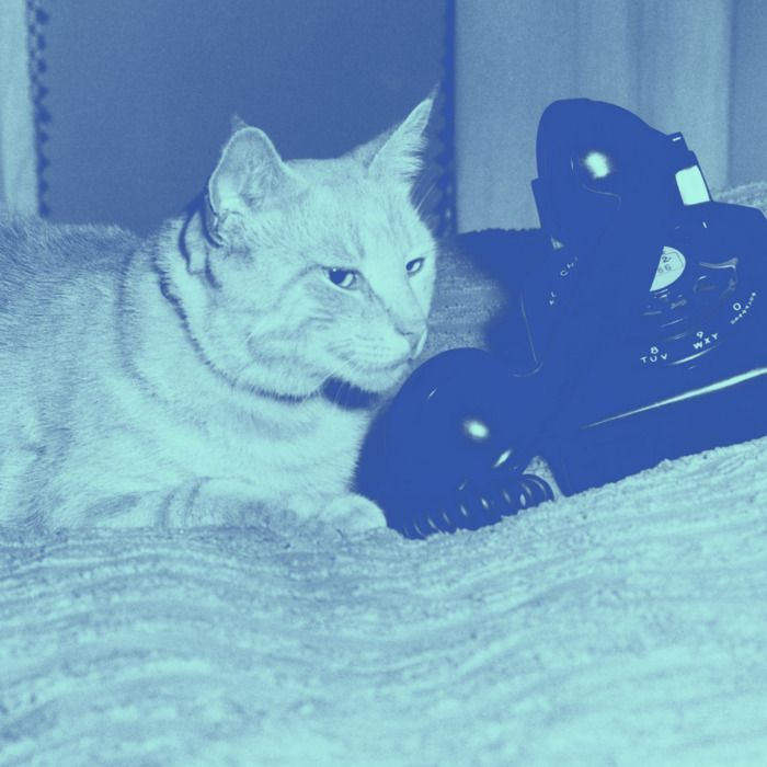 Cat lying in bed with a telephone