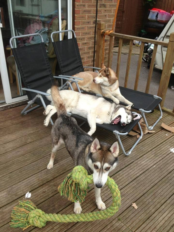 Funny shot of a threesome