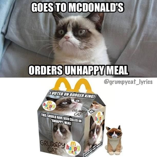 Find the Unique Funny Ragdoll Cat Memes