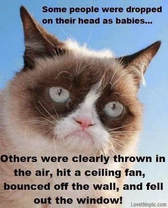 Find the Unique Funny Sillly Grumpy Cat Memes