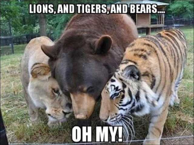 Funny Animal of The Day Release 5 31 s FunRare funnymemes funnypictures humor funnytexts funnyquotes funnyanimals funny