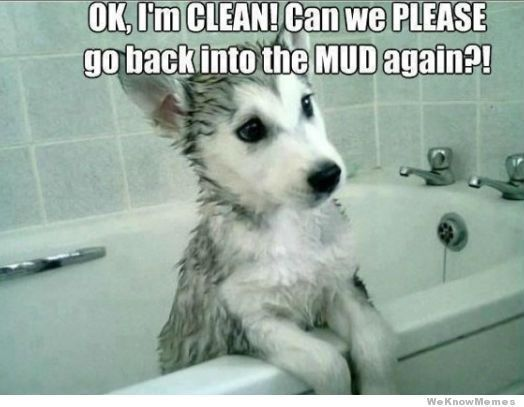 Ok I m Clean Cute Husky Puppies Husky Puppy Dogs And Puppies