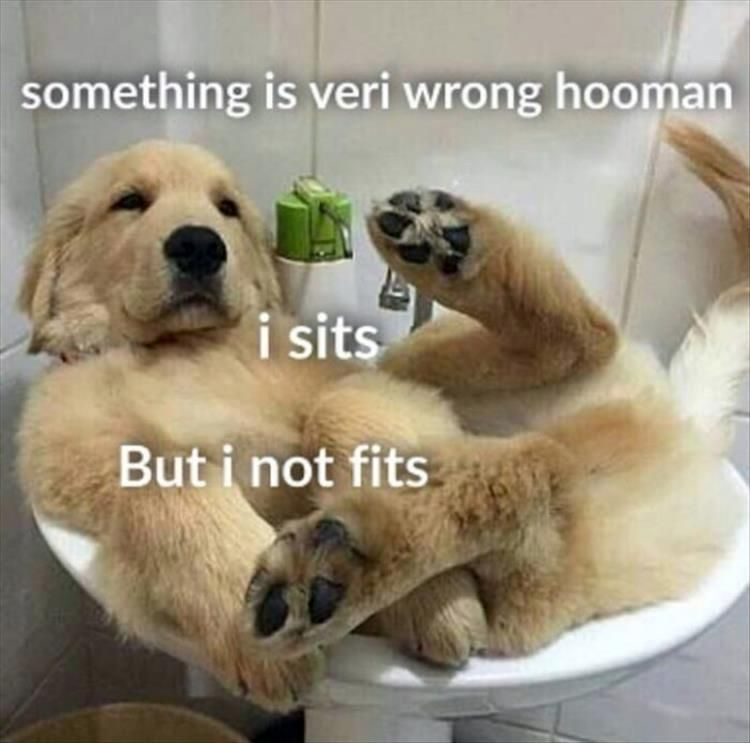 24 Funny Animal The Day