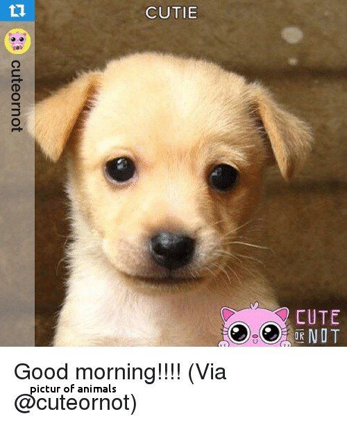 Pictur Animals Have A Great and Cute Weekend Fresh Cute Animal Cutie 10h Cute 0d