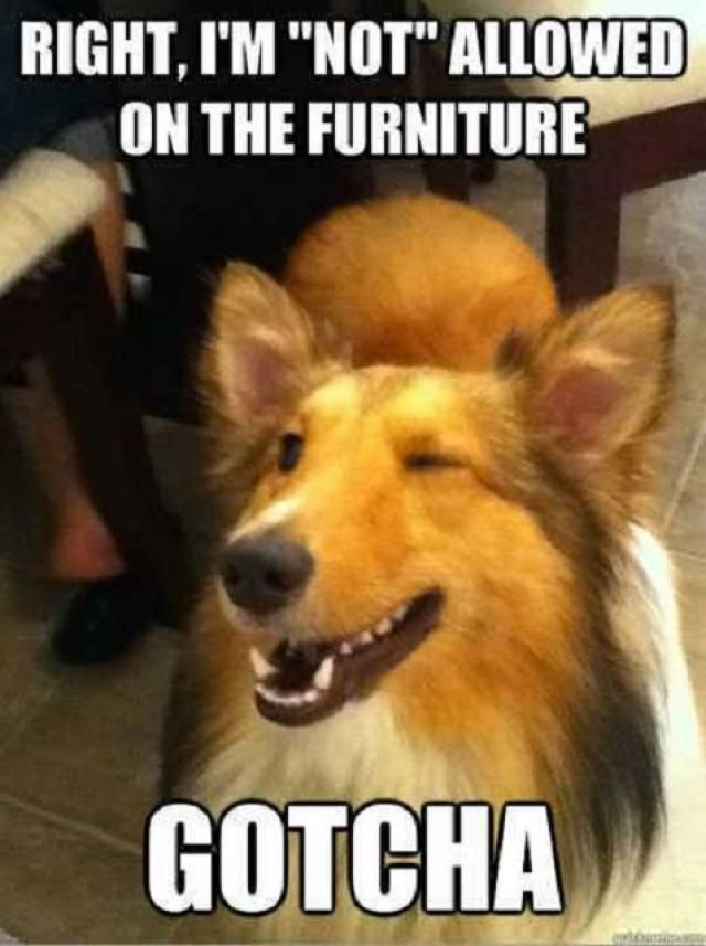 25 Dog Memes That Will Always Make Us Laugh ut