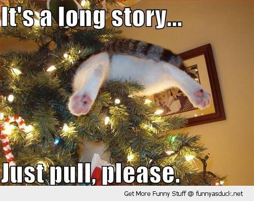 Best 30 Funny Christmas Memes &