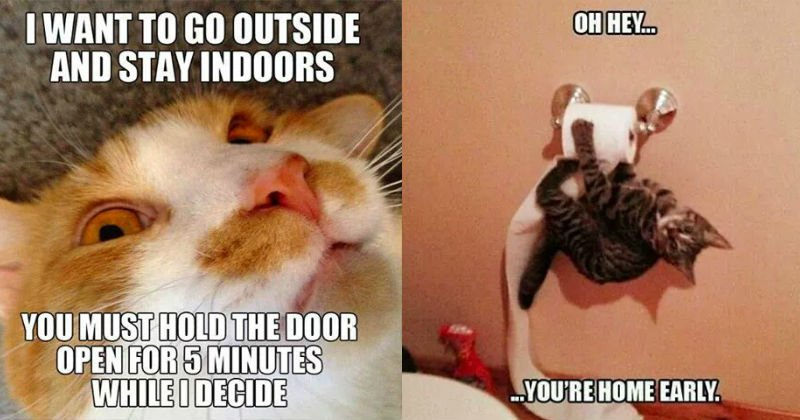 Gather the Awesome Cat Funny Pictures She Will Treat Us Like Gods