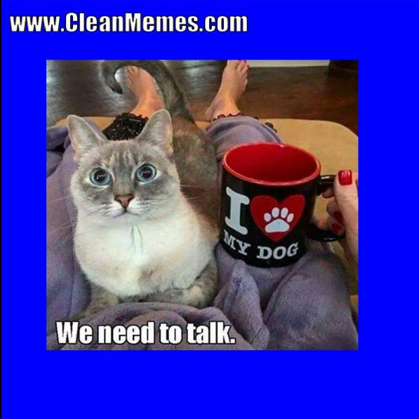 Gather the Awesome Funny Cat Memes that are Clean