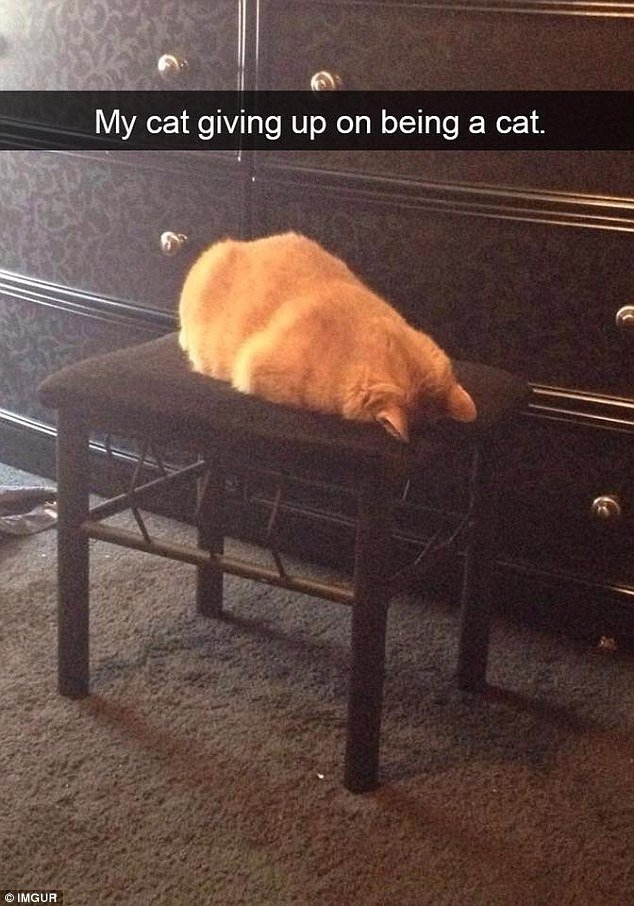 e owner spotted their cat giving up on being a cat and deciding to face