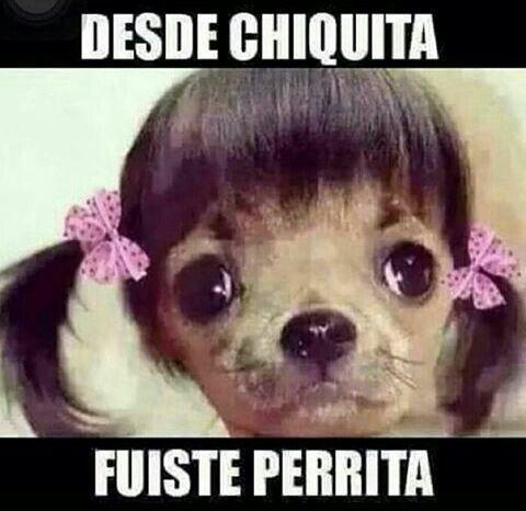 perrita Funny Memes Jokes Hilarious Mexican Problems El Humor Lol