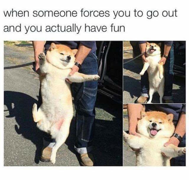 Being forced to do something and actually having fun shiba dog funny