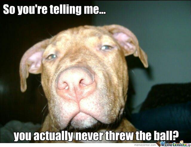 Pitbull Meme Pit Bull Love Dog Toys Best Dogs Fur Babies