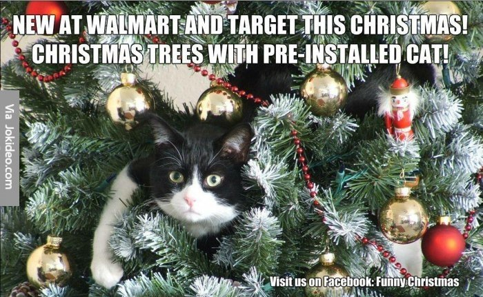 Cat in christmas tree meme