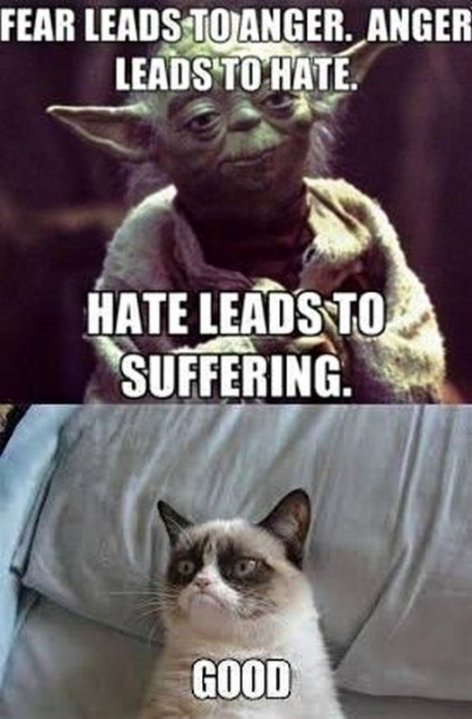 grumpy cat meme sadden your day 38