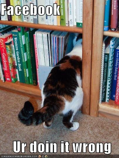 funny pictures library cat