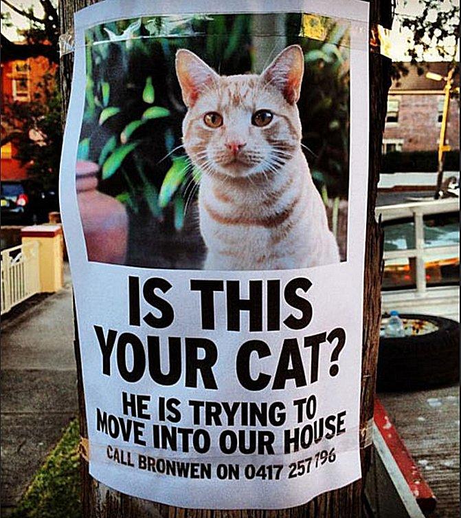 missing cat2 58b8c97e3df78c353c20cf55