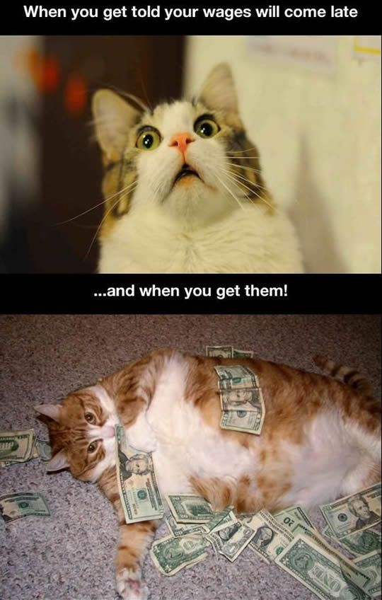 funny cat face the wage payday