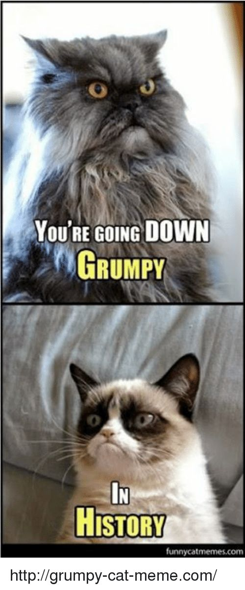 Gather the Beautiful Gumpy Cat Memes Funny