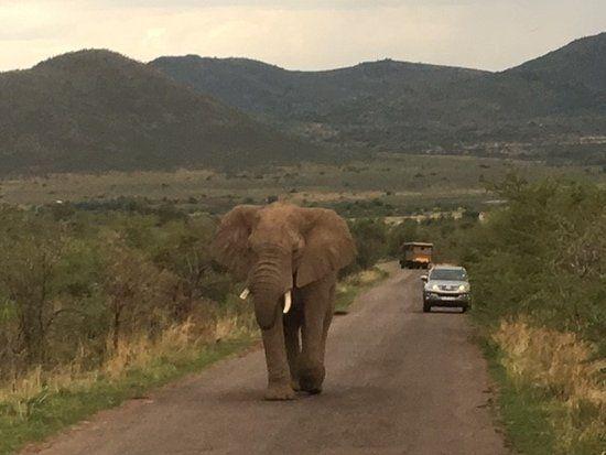 Go Safari Johannesburg 2018 All You Need to Know BEFORE You Go with s TripAdvisor
