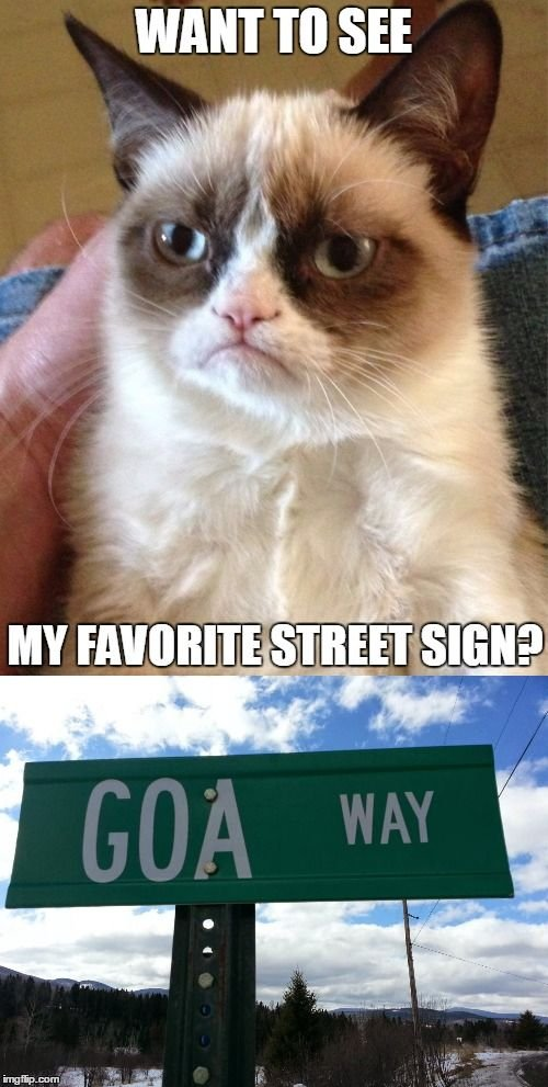 image tagged in memes grumpy cat funny street signs funny street signs new feature