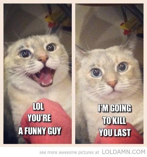 Cat Memes Dump