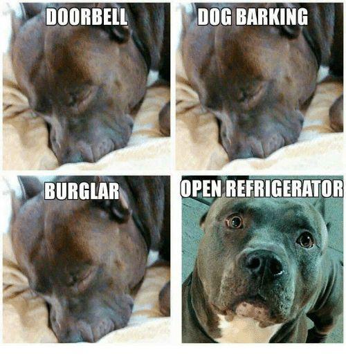 Memes Refrigerator and 🤖 DOORBELL DOG BARKING BURGLAR OPEN REFRIGERATOR