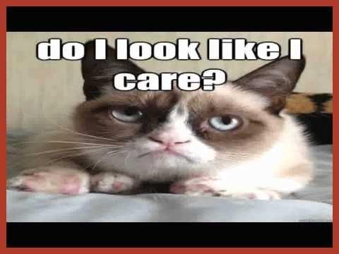 Inspirational Funny Grumpy Cat Memes Clean 40 New Funny Grumpy Cat